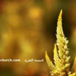 الحياة في المسيح