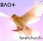 """""""انظروا إلى طيور السماء.. أبوكم السماوي يقوتها"""" (متى 26:6)"""